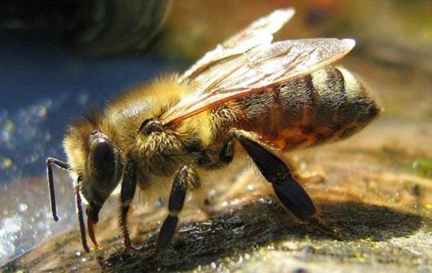 Пчелы ужалили американца больше тысячи раз